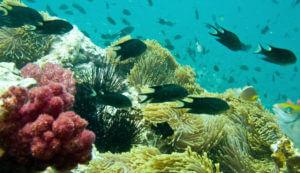 Onderwaterwereld Thailand