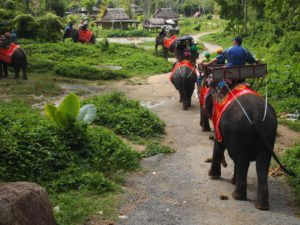 Olifant rijden in Phuket
